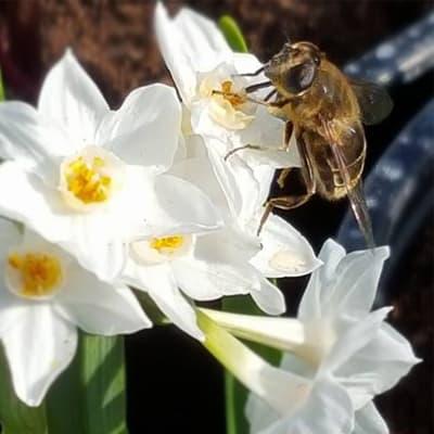 Bee Friendly Initiatives