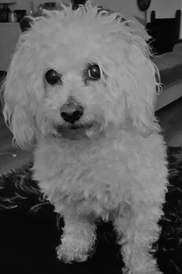 Bailey Profile Picture