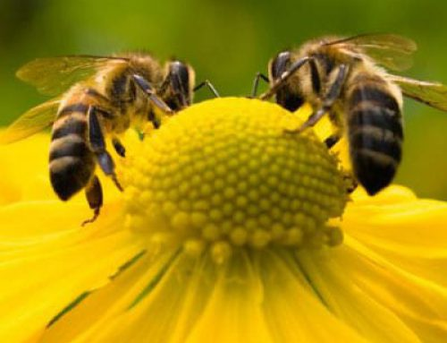 How Bee kind is your garden?