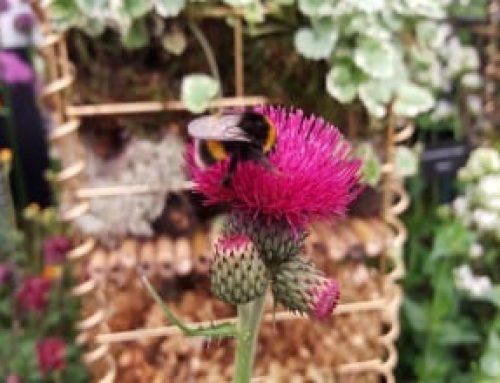 Long Tongued Bees